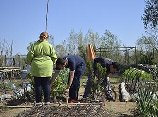 3C Cultivemos el Clima y la Comunidad sigue dando sus frutos-img3