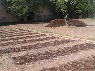 Únete al proyecto de agricultura urbana de Humana-img2