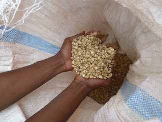 Humana ands HPP-Congo enhance in Gemena training on quality and seed multiplication-img1