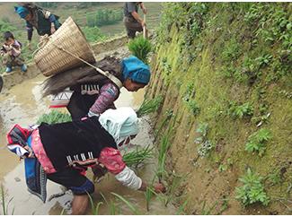 Compromesos amb el desenvolupament agrícola-img3