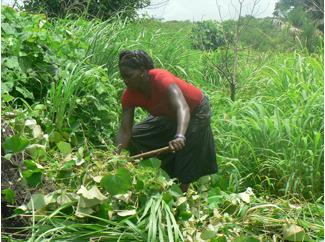Trabajando a favor de la seguridad alimentaria en Quinara, Guinea-Bissau-img1