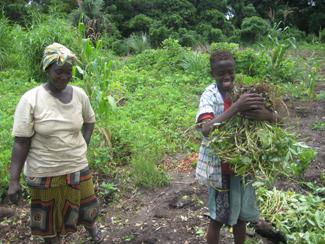 Trabajando a favor de la seguridad alimentaria en Quinara, Guinea-Bissau-img2