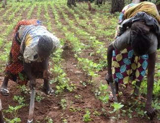 Els 3.000 agricultors participants obtenen els primers resultats-img1