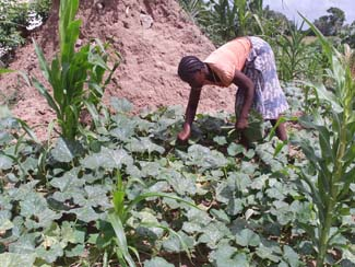 First results of the project to improve the food security in Boane, Mozambique-img1