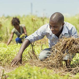 El reto del hambre cero nos involucra a todos-img3