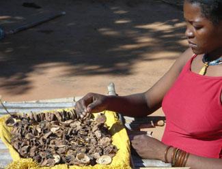 300 pequeños agricultores de Cabo Delgado incorporan túneles solares de secado de alimentos-img2