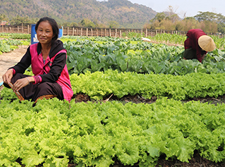 Laos: community development and agriculture beyond the pandemic-img1