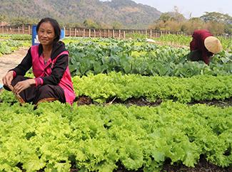Laos: desarrollo comunitario y agricultura más allá de la pandemia-img1