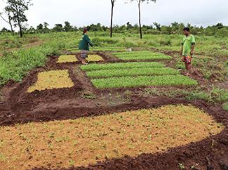 Laos y el desarrollo de la agricultura climáticamente inteligente-img1
