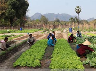 Laos: agricultura y ganadería sostenibles para mejorar la vida de las personas-img1