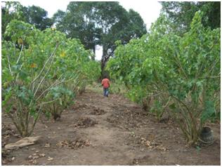 En marcha el centro de bio-combustible de Cabo Delgado, Mozambique-img2